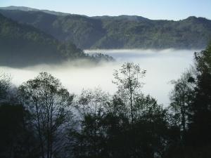 bosque-de-niebla