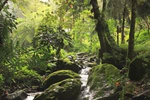 bosque-mesofilo